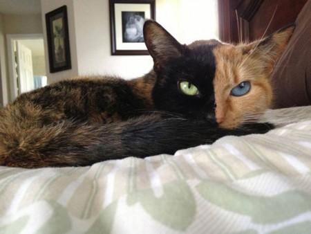 اروع قطط (3)