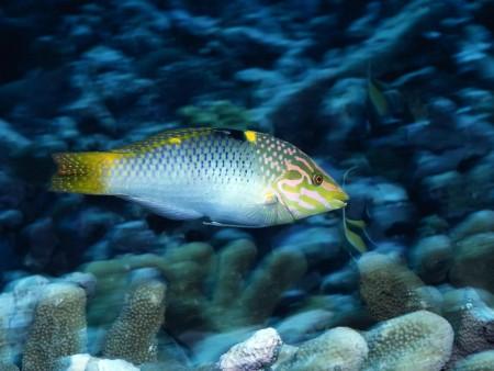 اسماك الزينة (5)
