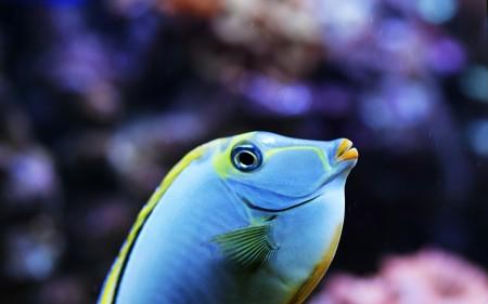 اسماك بالوان جميلة (2)