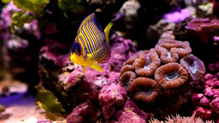 اسماك جذابة وجميلة جدا (1)
