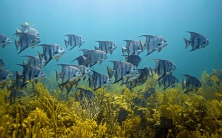 اسماك جميلة (2)
