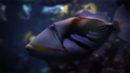اسماك جميلة (5)