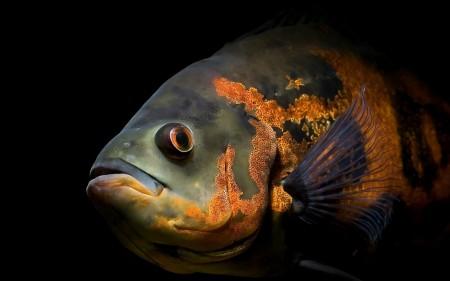 اسماك ملونة (5)