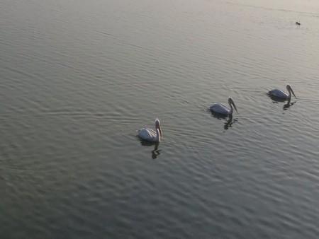 الطيور بالصور (2)