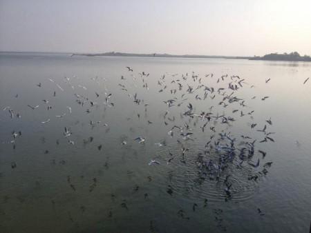الطيور بالصور (4)