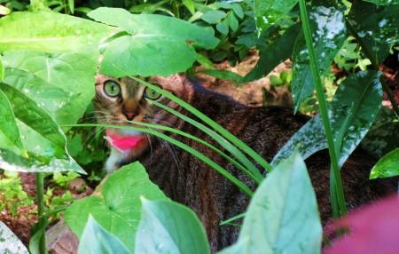 القطط (2)