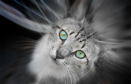 القطط (5)