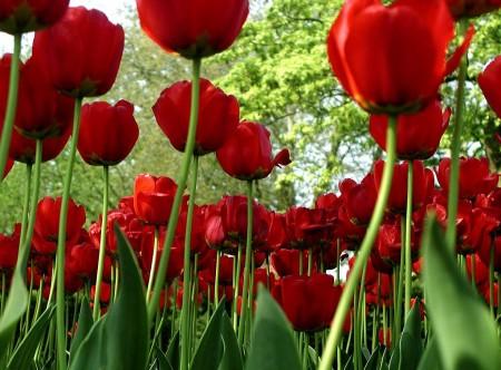 الوان الورد الجميلة (2)