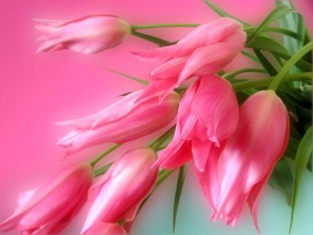 الوان الورد الجميلة (3)