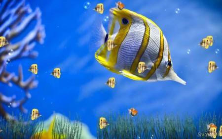 الوان سمك زينة (3)