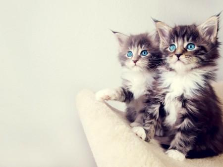 انواع قطط (1)