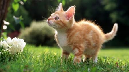انواع قطط (4)