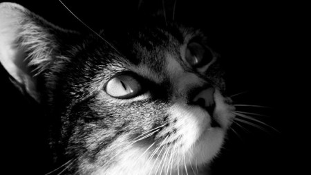 بالصور احلي قطط (4)