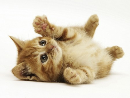 تحميل صور قطط (2)
