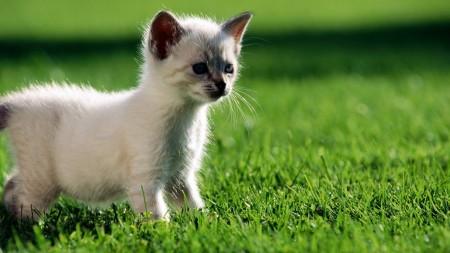 تحميل صور قطط (4)