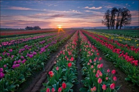 خلفيات زهور وورد (1)