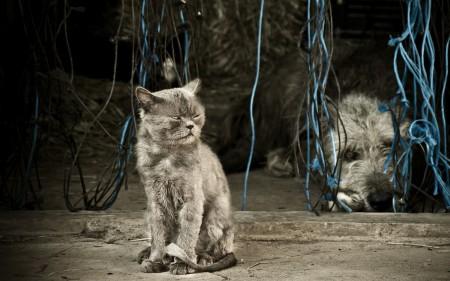 خلفيات صور قطط (1)