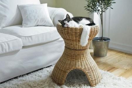 خلفيات صور قطط (4)