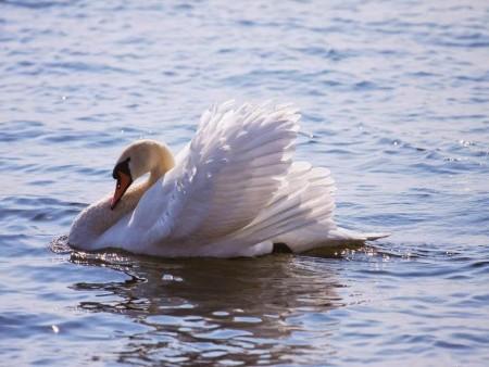 خلفيات طيور (5)