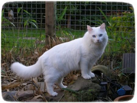 قطط 1