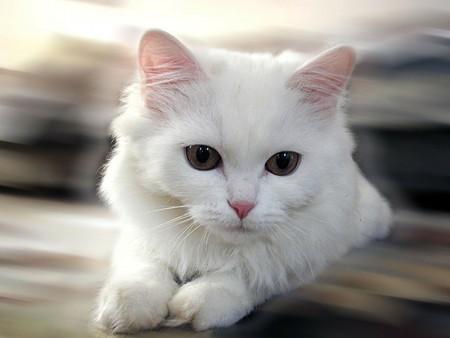 خلفيات قطط (2)