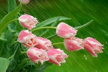 زهور جذابة وجميلة (2)