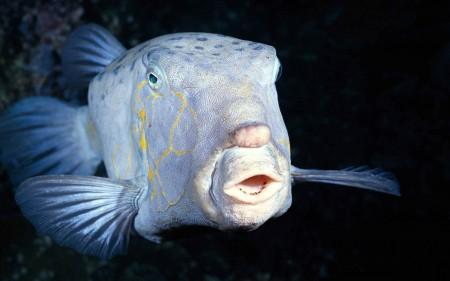 سمك زينة بالصور (3)