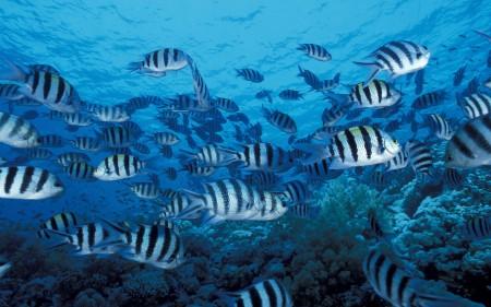 سمك زينة جذاب (2)