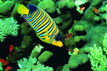 سمك زينة جميل (2)