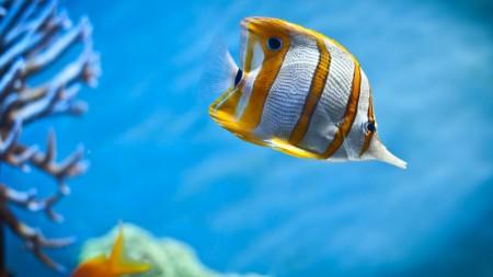 سمك زينة جميل (4)