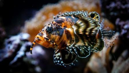 سمك زينة فخم (2)