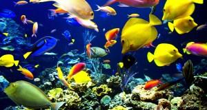 سمك ملون (2)