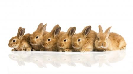 صور أرانب HD (6)