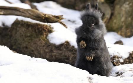 صور ارانب جميلة (4)