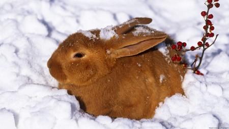 صور ارانب جميلة (6)