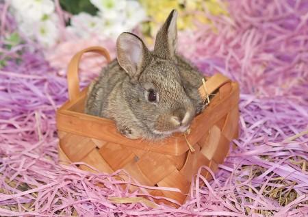 صور ارانب حلوه (4)