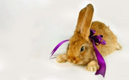 صور ارانب خلفيات (3)