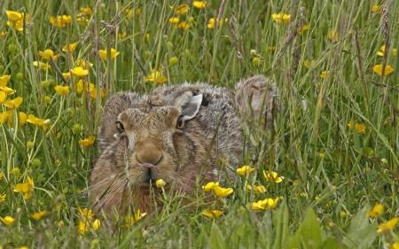 صور ارانب صغار (3)