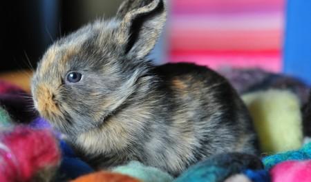 صور ارانب صغار (5)