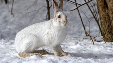 صور ارانب صغار (8)