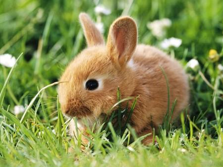 صور ارانب صغيرة (4)