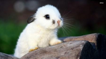 صور ارانب ملونة (6)