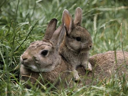 صور ارنب (1)