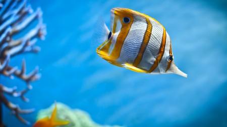 صور اسماك ملونة (1)