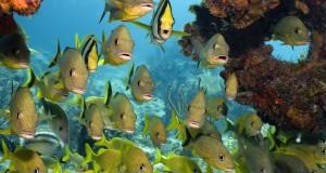صور اسماك ملونة (4)
