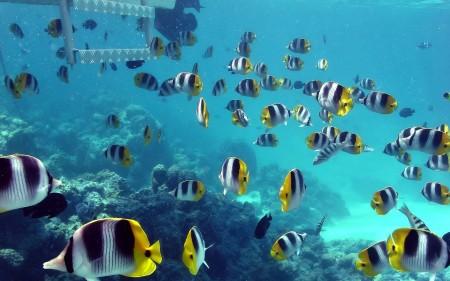 صور الأسماك الزينة (1)