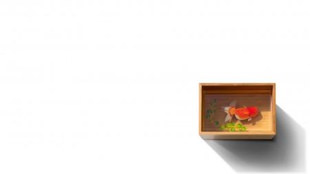 صور الاسماك (2)