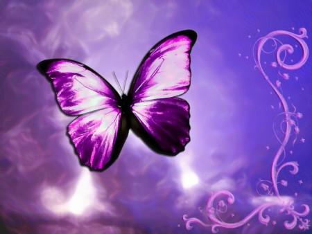 صور الفراشات (2)