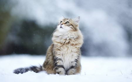 صور القطط (2)
