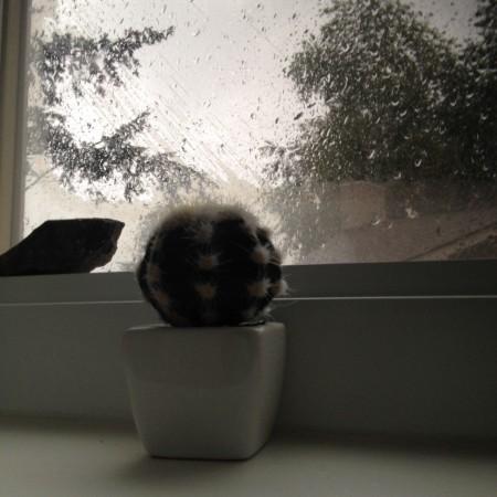 صور المطر (4)